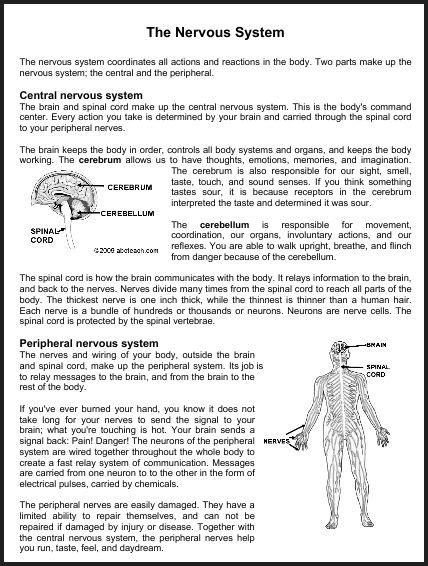 images  human brain diagram worksheet human
