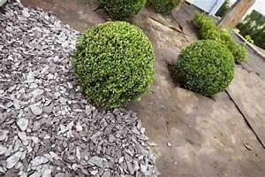 Bache Anti Herbe Sous Gravier : toile de paillage non tissee plantex et paillage ~ Edinachiropracticcenter.com Idées de Décoration
