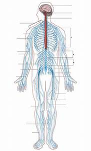 Peripheral Neuropathy  Causes  Symptoms  Diagnosis