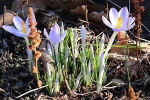 Blumen Für Garten : fr hlingsblumen 40 sch ne blumen f r garten blumentopf und vase ~ Frokenaadalensverden.com Haus und Dekorationen