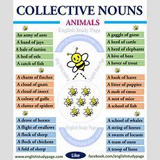 Collective Nouns  Animals  English Study Page