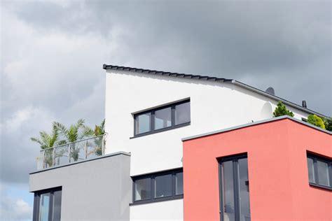 palme fuer balkon sorten pflege und mehr