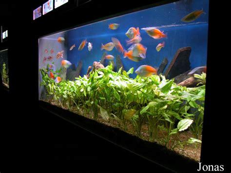aquarium eau douce malo
