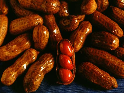 kitchen  kelley slow cooker boiled peanuts
