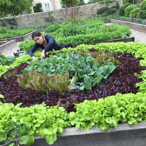 organic kitchen garden 10 components of the best organic kitchen garden poshveggies 1227