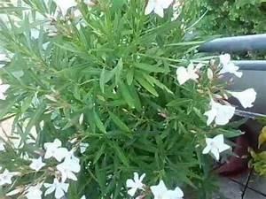 Mediterrane Pflanzen Liste : mediterrane pflanzen terrasse youtube ~ Watch28wear.com Haus und Dekorationen