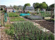 Allotment Garden Vegetable, Fruit & Herb Gardening on an