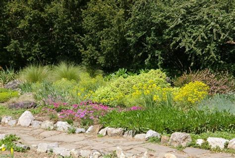 10 Plants For Dry Areas