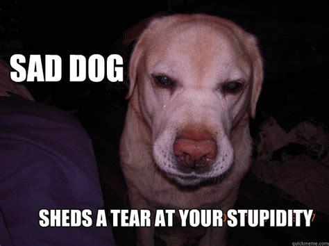 Sad Dog Meme - sad dog sheds a tear at your stupidity sad dog quickmeme