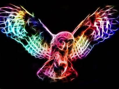 Fractal Owl Rainbow Fractals Sphotos Fbcdn Akamaihd