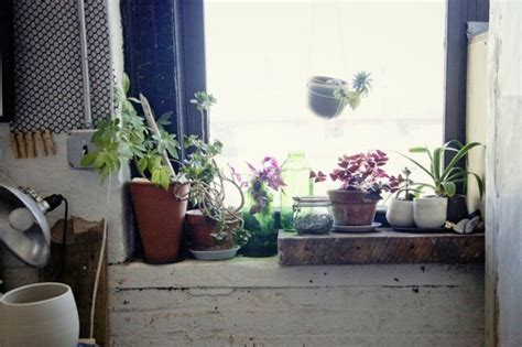 7 apartment gardening ideas you can try to prove