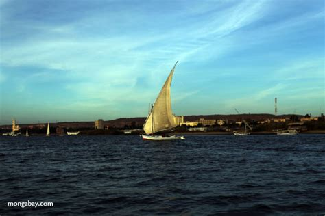Felucca Boat by Felucca Sail Boat On The Nile River At Aswan