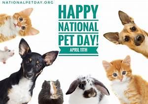 National dog daytm nationaldogday twitter for Dog day sitting