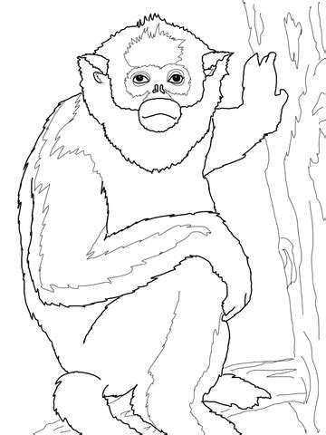 golden monkey coloring page supercoloringcom