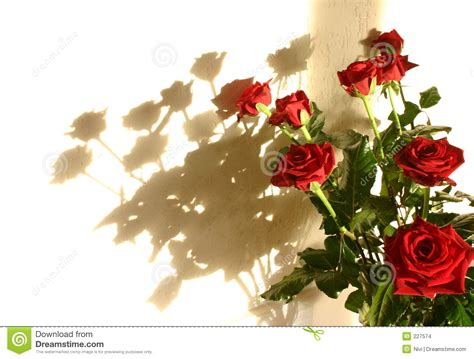roses shadow stock images image