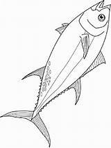Tuna Coloring Fish Pages Printable Recommended sketch template