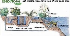 Bionova Natural Swimming Pools Keep Water Pristine And