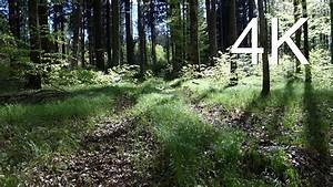 4k Video  Uhd  April Forest Walk