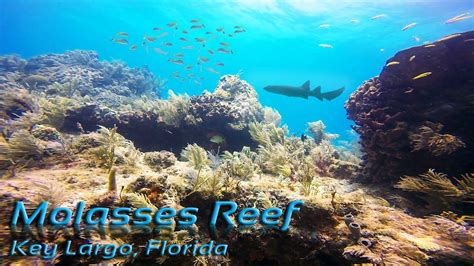 molasses reef key largo scuba diving youtube