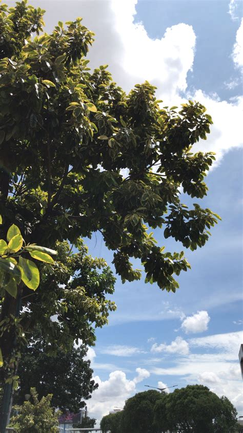 perpaduan hijau daun dan langit biru fotografi alam
