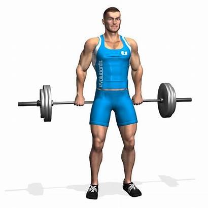 Shrugs Bilanciere Barbell Piedi Evolutionfit Esercizi Muscles