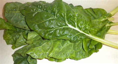 cuisiner blettes feuilles cuisiner blettes feuilles cuisiner les blettes diff