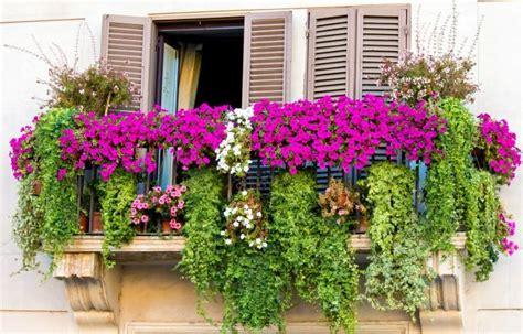 fiori in terrazzo fiori da balcone donna moderna