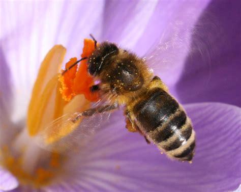 abeilles quelle catastrophe contrepoints