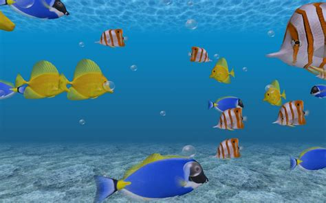 3d Animal Wallpaper 3d Fish Wallpaper - hd fish wallpaper wallpapersafari