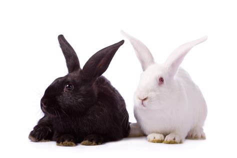 pet carriers rabbits how to breed rabbits