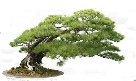 bonsai tree  images  clkercom vector clip art