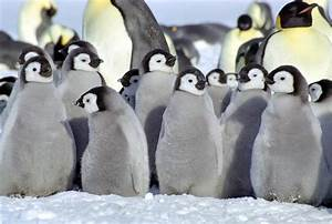 Funny Animals: Cute Baby Penguins
