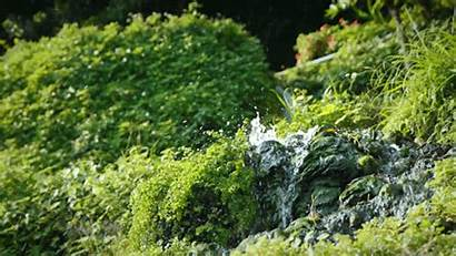 Plants Spring Nature Forest Gifs Okinawa Ponds