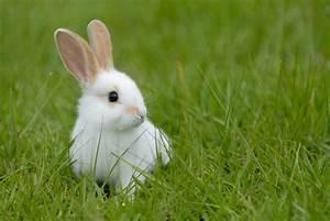 clapier a lapin pas cher trendyyycom With maison rondin bois prix 9 maison pour lapin nain animaloo