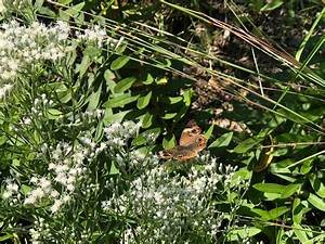 Beechwood Lecture - Kettle Pond Ri Native Plant Garden