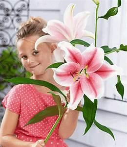 Lilie Topfpflanze Kaufen : lilie pflege lilie lilium wuchs pflege und bedeutung ~ Lizthompson.info Haus und Dekorationen
