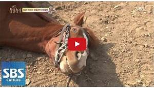 Horse Pretends To Be Dead Every Time He U2019s Supposed To Go For A Ride  U2013 The Horseaholic