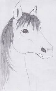 Horse Head Sketch by PonyAdler86 on DeviantArt
