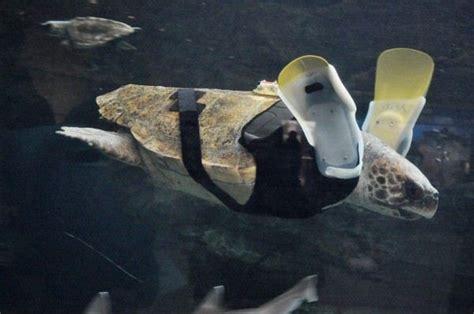 animals  prosthetic limbs health