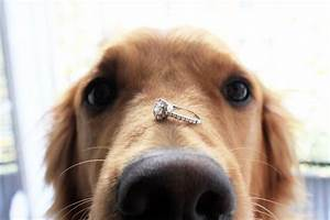 cuteness alert pet proposals to make sure theyll say With dog wedding ring