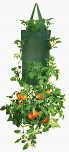 Bester Dünger Für Tomaten : h ngende pflanztasche f r tomaten ~ Michelbontemps.com Haus und Dekorationen
