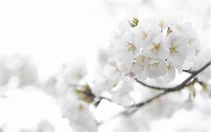 White Flowers Background wallpaper | 2560x1600 | #23715