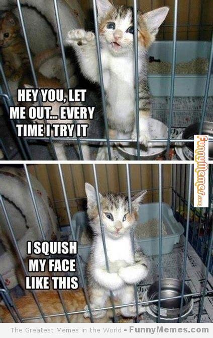 Hey You Let Me Out Cat Meme Cat Planet Cat Planet