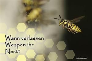 Wann Verlassen Wespen Ihr Nest : wann verlassen wespen ihr nest die wichtigsten termine ~ A.2002-acura-tl-radio.info Haus und Dekorationen
