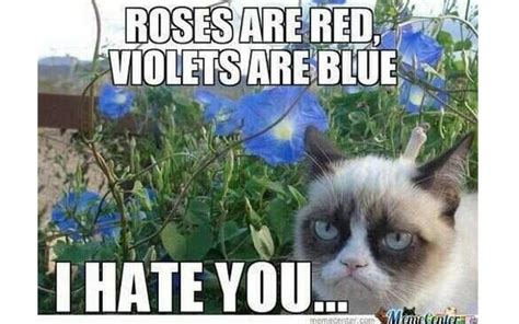 Anti Valentines Day Memes - funny anti valentines day singles quotes whatsapp facebook status quotes sayings