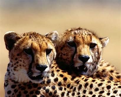 Animals Amazing Wallpapers Wild Desktop Background Lovable