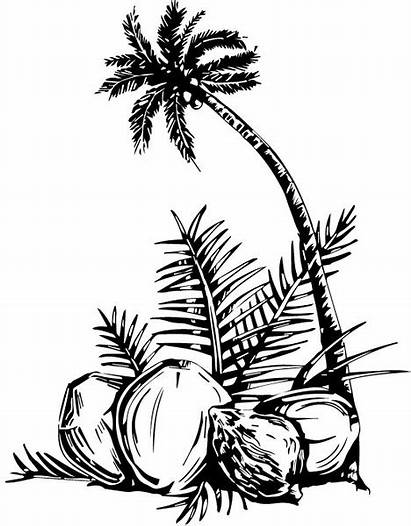 Coconut Tree Vector Palm Sunset Coloring Drawing
