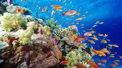 Egypt Reef Underwater Coral Southern Seas Wallpapers