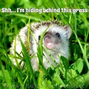 Cute Hedgehog Memes