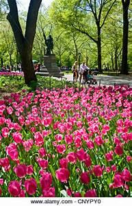 Blumen Im Frühling : b ume und blumen bl hen im central park im fr hling new york new york usa stockfoto bild ~ Orissabook.com Haus und Dekorationen